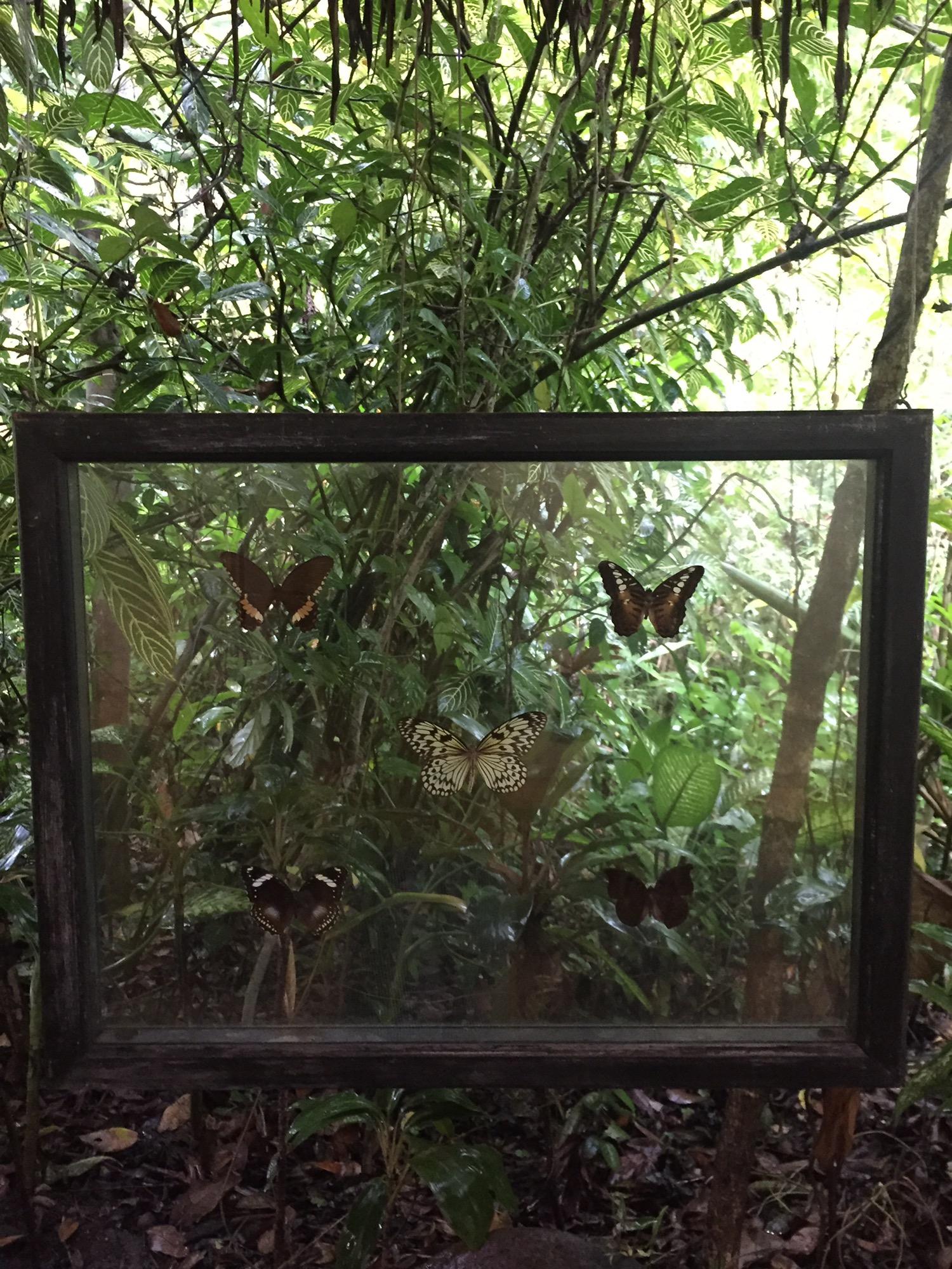 나비농장 (9).JPG