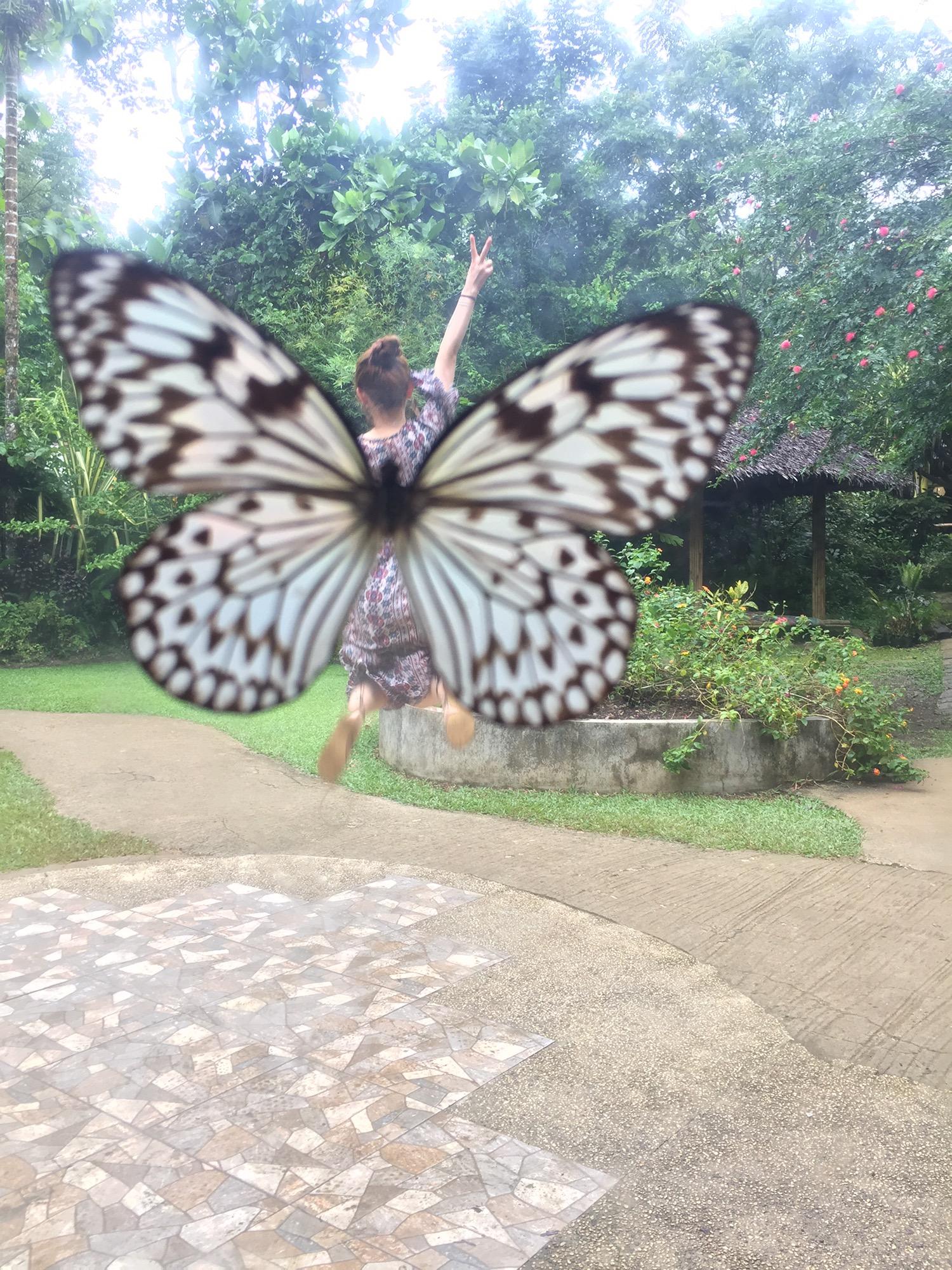 나비농장 (19).JPG