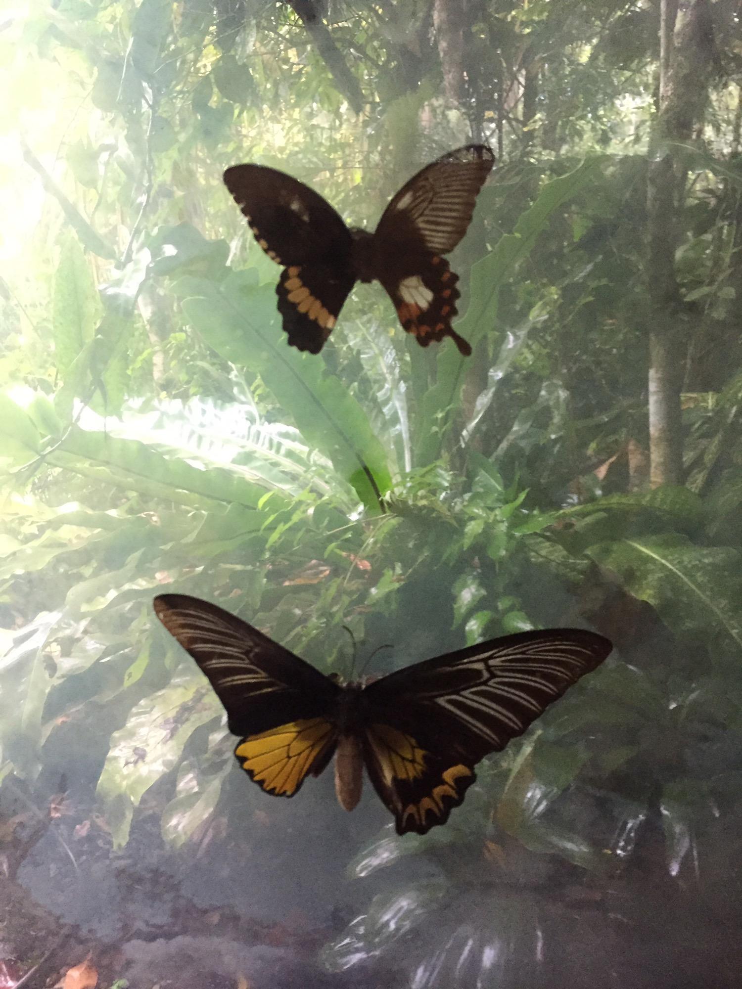 나비농장 (6).JPG