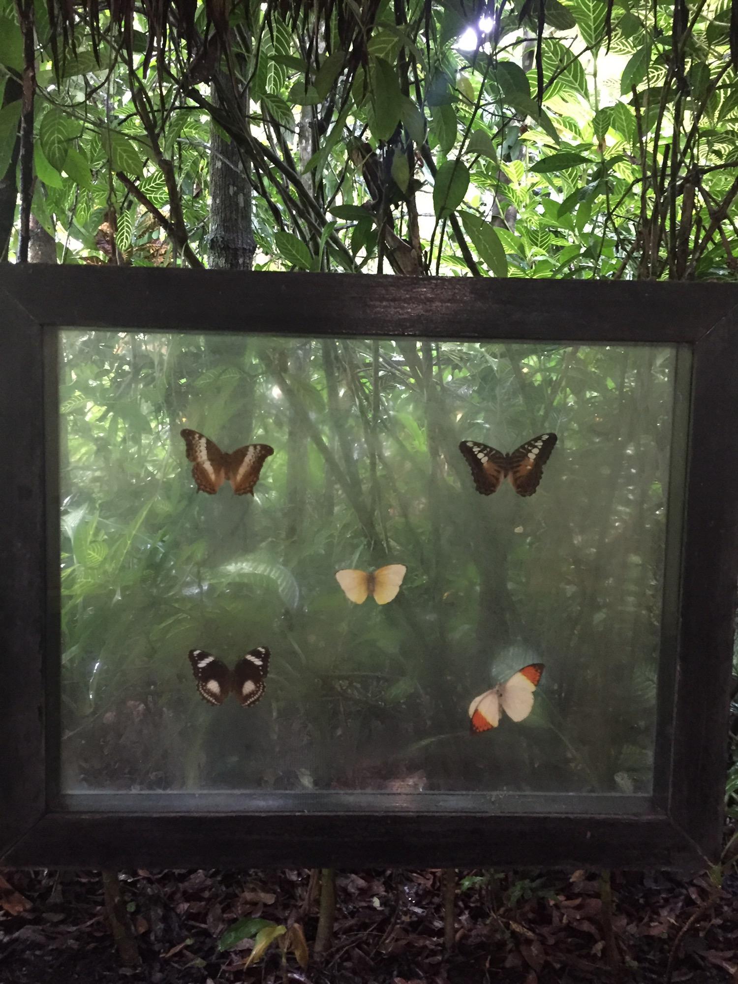 나비농장 (8).JPG