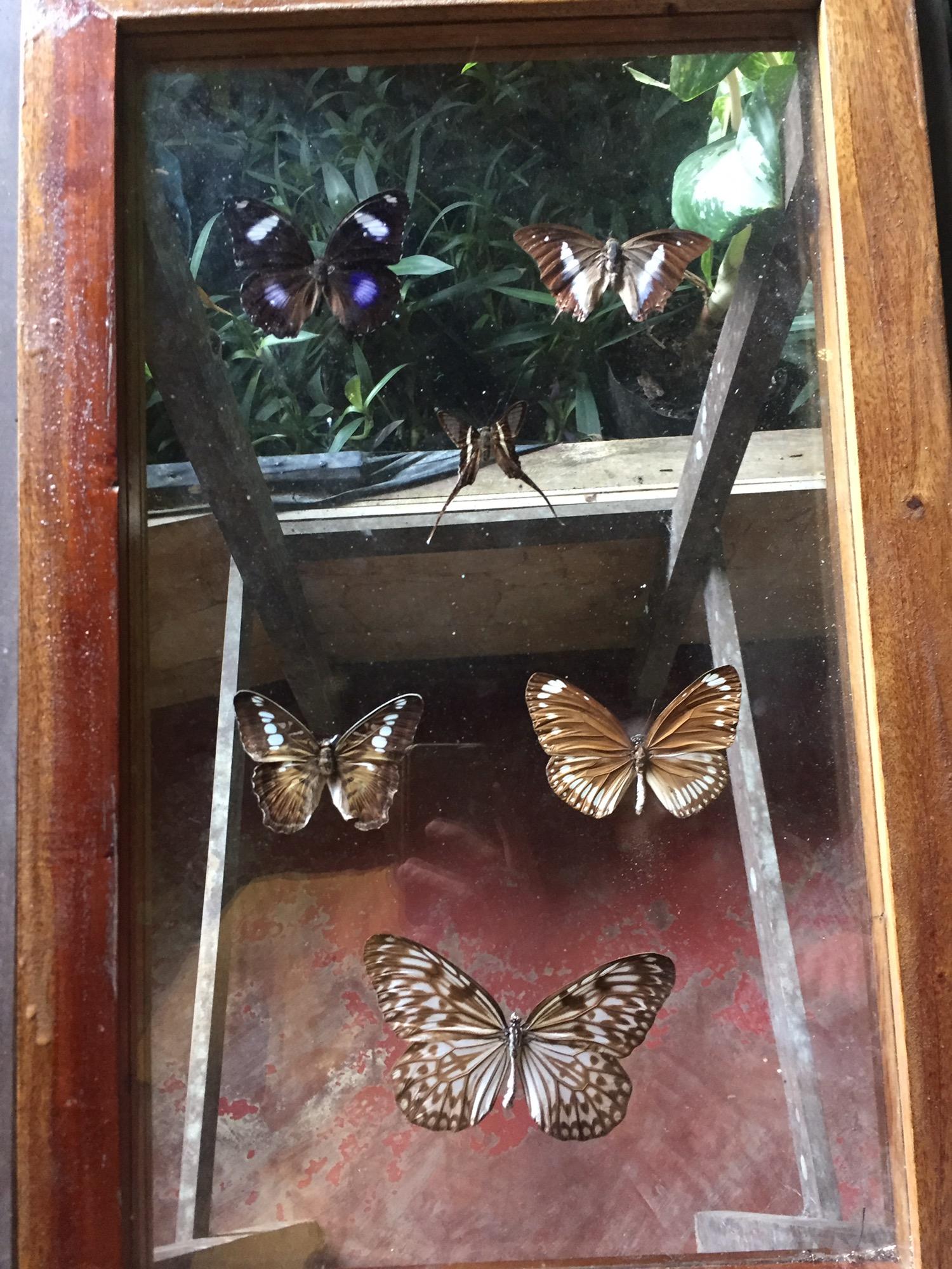 나비농장 (4).JPG