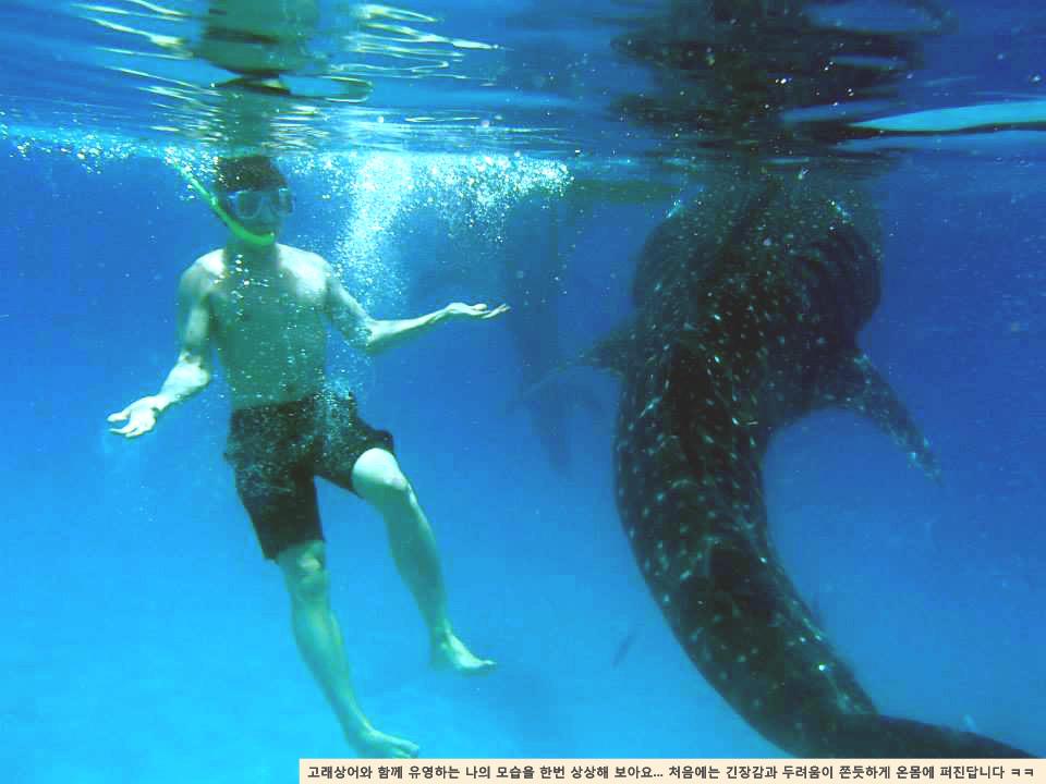 고래상어투어1jpg.jpg