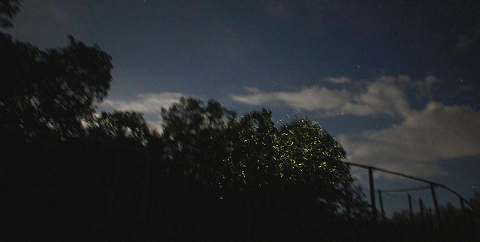 반딧불.jpg